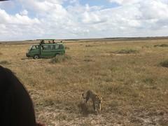 IMG_1567 (suuzin) Tags: masai mara safari