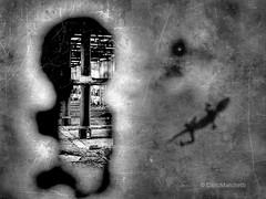 """Ex Slaughterhouse"" (carlomarchetti62) Tags: carlomarchetti photography art animals cityjungle freedom feel heart insideout life suffering landscape present rome transformation soul silence bnwworkers bnwartstyle bnwplanet2018 bnw bnwaddiction bnwitalian blackandwhite bnwgreatshots bnwart bnwphotography bnwdetaillovers bnwdrama"