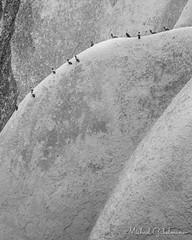 Resting Pigeons (Michael Gabelmann) Tags: animal bird birds curve europe goreme pigeon rock shape turkey