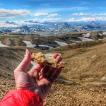 Iceland ~ Landmannalaugar Route ~  Ultramarathon is held on the route each July ~ Hiking from Camp -  Lava  field - Have a snack thumbnail