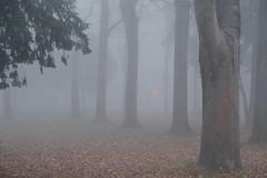 Di solo spirito (Ro_.) Tags: film wimwenders brunoganz nebbia alberi