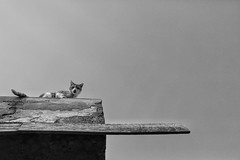 Cats and Nature (5) (Polis Poliviou) Tags: cat cats animal animals domesticcat petphotography petpics petphotos garden 2018 kitten cute naturephotography naturephotos winter lovecats lovenature beautyinnature cyprustheallyearroundisland cyprusinyourheart yearroundisland zypern republicofcyprus κύπροσ cipro кипър chypre ©polispoliviou2019 polispoliviou polis poliviou πολυσ πολυβιου mammals housecats pet pets face portraits eyes eyecontact