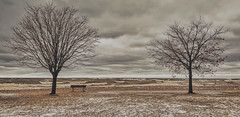 Getting Artsy #4 (KWPashuk (Thanks for >3M views)) Tags: samsung galaxy s8 s8plus lightroom luminar luminar2018 luminar3 kwpashuk kevinpashuk water waves trees winter weather clouds bench coronation park oakville ontario canada