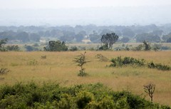 Landscape (douwesvincent) Tags: nature uganda oeganda africa world earth eco natural outdoor safari wild open holiday trip birding explore green flora fauna life