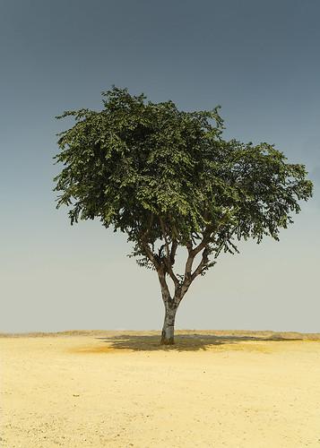 {Lone Tree}FCC121