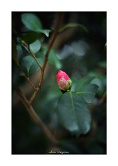 2019/2/11 - 1/12 photo by shin ikegami. - SONY ILCE‑7M2 / Voigtlander NOKTON CLASSIC 40mm f1.4 SC VM (shin ikegami) Tags: asia sony ilce7m2 sonyilce7m2 s7ii 40mm voigtlander nokton nokton40mmf14sc tokyo photo photographer 単焦点 iso800 ndfilter light shadow 自然 nature 玉ボケ bokeh depthoffield naturephotography art photography japan earth