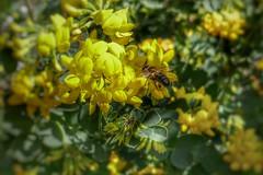 #Febrero adelantado (Pedro Angel Prados) Tags: febrero panasonic dmctz100 ƒ28 91 mm 11000 125 insecto natura nature flor flower
