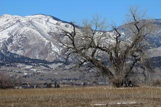 Prairie, then mountains