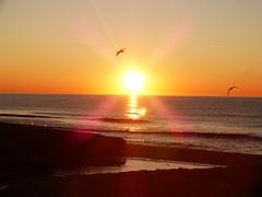 Primer amanecer 2019 (15) (calafellvalo) Tags: amaneceralbasolcalafellseaalbadasunrise amanecer sunrise amanecerdelaño2019 alba albada sea mar calafellvalo contraluz calafell aves gaviotas