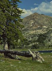 Wyoming high country (tevans9129) Tags: wyoming mountain lake highcountry nikon f4 film