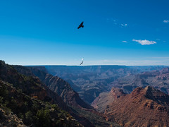 Grand Canyon from Desert View, South Rim, AZ (Jun C Photography) Tags: olympus microfourthirds omd mkii grandcanyon nationalpark sandiego eagles u43 california em5 arizona coloradoriver horseshoebend markii mk2 mft route66