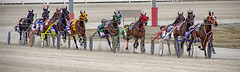 All the Colors of the Rainbow (sjoblues) Tags: horses harnessracing racetrack racing sulky race animals