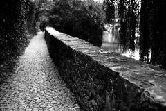 Way along the river (Leica M6) (stefankamert) Tags: film analog grain dof bokeh leica leicam6 m6 way path man people blur blurry river summitar kodak trix blackandwhite blackwhite noiretblanc noir analogue tübingen neckar trees cobblestones wall tones textures stefankamert highcontrast