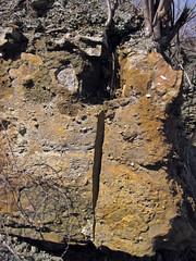 Fossiliferous dolostone (Rockford Limestone, Lower Mississippian; Burkesville West Rt. 90 roadcut, Kentucky, USA) 11 (James St. John) Tags: rockford limestone mississippian burkesville kentucky dolostone