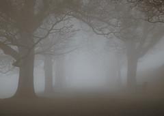 Foggy Avenue (graemes83) Tags: pentax fog lyme park national trust mist foggy misty outdoors