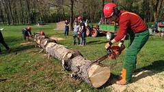 Enborra mozten (Derio Nekazaritza Eskola BHI) Tags: derio nekaderio pinua pino talado ikasleak insignis errekalde