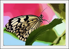 Art of nature (Logris) Tags: vp virtual painter butterfly schmetterling art animal insect insekt tier painting