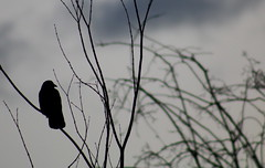 2019_01_10_9999_53 (Talisman Pickering) Tags: bird branch water beach