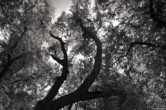 Fronde (Atreides59) Tags: prague praha républiquetchèque czechrepublic arbre tree nature black white bw blackandwhite noir blanc nb noiretblanc pentax k30 k 30 pentaxart atreides atreides59 cedriclafrance