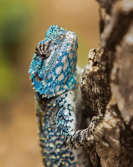 Lizard on a tree (EpicIvo) Tags: ifttt 500px lizard tree shallow depth field selective focus south africa animal reptile blue climbing summer wood