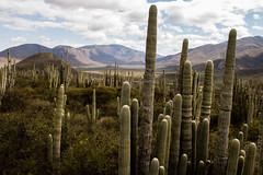 Tehuacan Reserva (pablo.ing23) Tags: 2013 mexico phm pabloantoniohernandezmendoza reservanatural teh tehuacan tehuacancanon70d cactaseas photography puebla
