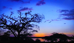 AFRICA - Trees, birds and lake at sunset (Jacques Rollet (very little available)) Tags: arbre tree oiseau bird couchant crépuscule sunset ciel sky afrique africa lac lake groupenuagesetciel