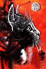 Street (art) red cat in Paris (Marco Braun) Tags: streetart graffiti comic bunt farbig colours colourful coloured katze cat chat gato gata gatta gatto maowalart urbanart blackwhite blanche noire colour couleures eye auge red rosso rot rouge кошка 貓 猫 māowalart