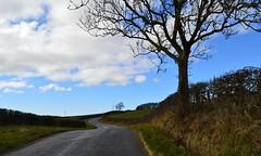 Winding Country Lane, Ayrshire, Scotland. (Phineas Redux) Tags: windingcountrylaneayrshirescotland scottishcountrylanes scottishlandscapes scottishscenery ayrshirescotland scotland