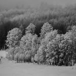 Frozen Silence Near Conway Summit US395 thumbnail