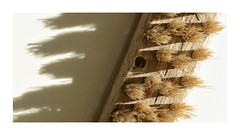 Macro Mondays - Hard light (frankvanroon) Tags: macromondays hardlight brush macro hmm mm