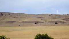 0424 Hügel bei - hills near; Lochiel (roving_spirits) Tags: australia australien australie southaustralia
