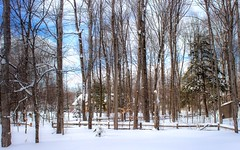 Bucolic (Scottb211) Tags: winter trees gaylord gaylordmichigan gaylordmi upnorth northernmichigan