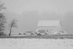 Winter on the Farm (ramseybuckeye) Tags: winter snow fog foggy mist white barn round bales farm rural trees distant visibility van wert county ohio monochrome black