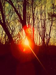 UNDER A RED SUN (novaexpress93) Tags: novaexpress93 sun trees nature sunrays backlight highcontrast sunset sundown evening dusk twilight lofiphotography lensflare