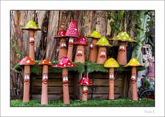 Family Portrait ;-) (Francis =Photography=) Tags: europa europe france alsace hautrhin 68 grandest champignons sourire smile pilz mushroom lächeln