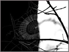 Black and White (Hope2b) Tags: spiderweb web bw black white framed florida ottersprings trenton