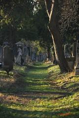 IMG_8529 (Pfluegl) Tags: wien vienna zentralfriedhof graveyard europe eu europa österreich austria chpfluegl chpflügl christian pflügl pfluegl spring frühling simmering