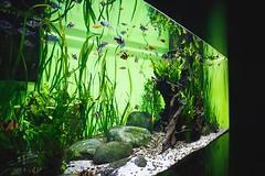 How Much Co2 Do Planted Aquariums Need? (aquaticwarehouse858) Tags: aquarium sea fish water tank life underwater blue glass marine nature ocean saltwater animal aquatic exotic colorful bright places zoo oceanarium window tropical looking museum big light sand scales plants reef wood grass colourful beautiful russianfederation