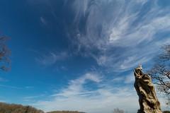 Clouds (alanrharris53) Tags: clouds sky blue spring dead tree bradgate bradgatepark samyang 75mm fisheye