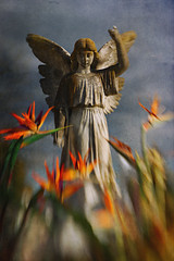 Angel dressed in colors (Lucretia My Reflection) Tags: lensbaby sweet50 tiltlens cemetery grave gravestone statue angel colors bokeh texture selectivefocus blur goth gothic haunting seeinanewway wings flowers clouds cloudedsky orange moss wingedangel
