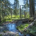 Muir Creek Trail thumbnail