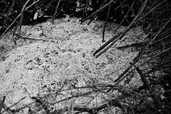 Popiół II (kotmariusz) Tags: monochrome black white bw blackandwhite poland ognisko popiół gałęzie polska analog 35mm filmphotography świdnica