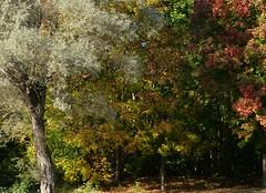 Kurpark Timmendorfer Strand (four-hearts) Tags: ts timmendorferstrand ostholstein lübeckerbucht kurpark bäume herbst farben herbstfarben pflanzen natur landschaft park ostsee schleswigholstein