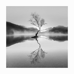 That tree! (Nick green2012) Tags: square blackandwhite silence