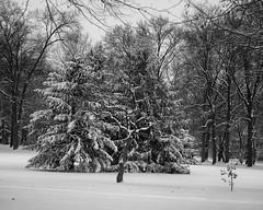 TowerGrovePark_SAF4909 (sara97) Tags: copyright©2019saraannefinke missouri photobysaraannefinke saintlouis towergrovepark towergrovepark2019 winter winter201819 monochrome bw blackandwhite blackwhite