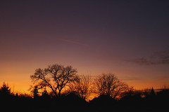 Sunset (Péter Vida) Tags: sunset sky wood natural winter naplemente égbolt fa természet tél