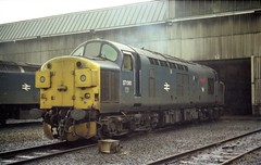 """37081 """"Loch Long"""" at Eastfield on a dreich day in August 1982. (colin9007) Tags: glasgow eastfield br diesel englishelectric class 37 37081 d6781 lochlong"""