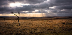 The Survivor (Phil-Gregory) Tags: tree sun rays peakdistrict derbyshire sunset clouds sky nikon d7200 tokina 1120mm wideangle ultrawide scenics landscapes ngc