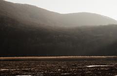 landscape (bidutashjian) Tags: bidutashjian nikond3500 landscape ionaisland nystate mountains wetlands shadows light winter snow ice frozen nature outside