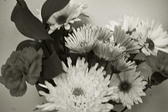 Black And White Flowers. (dccradio) Tags: lumberton nc northcarolina robesoncounty indoor indoors inside flower floral flowers bouquet valentinesdaybouquet valentinesday carnation daisy february winter morning saturday saturdaymorning goodmorning nikon d40 dslr bw blackandwhite blackwhite blur blurred blurry